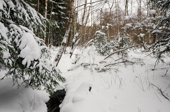 Krásenské rašeliniště v zimě