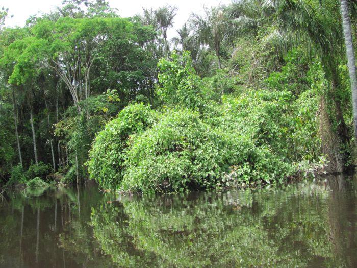 Asijské i africké pralesy dodnes skrývají nejedno tajemství. Kdo ví, co v nich dodnes přežívá a v noci vyletuje z temných skrýší.