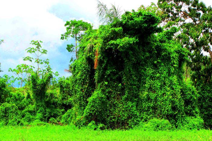 Skrývají deštné pralesy dodnes poslední populace dravých dinosaurů?