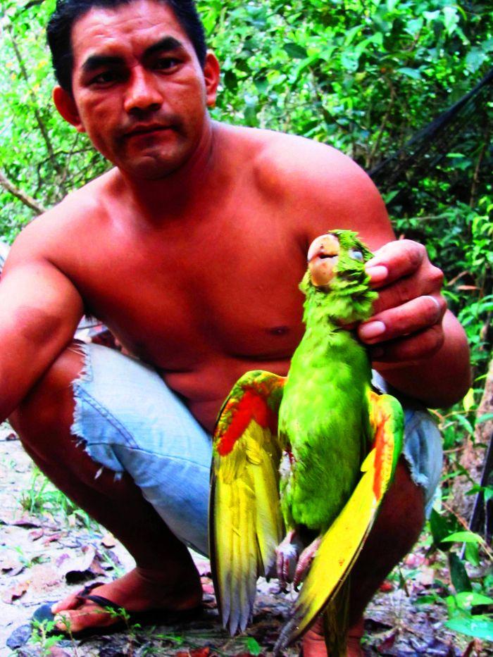 Jihoameričtí indiáni o pralesní harpyji vyprávějí neuvěřitelné příběhy. Pravdou ovšem je, že jim občas unese malé dítě.