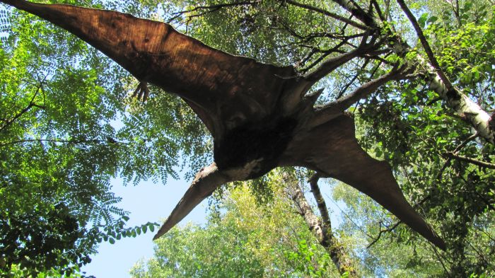 Jenom některé druhy létajících plazů pterosaurů (na snímku) trumfly osmimetrové rozpětí  největšího létajícího ptáka všech dob argentavise.