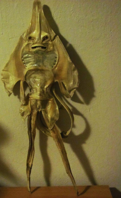 Tyto mumifikované ostatky byly v dávných dobách důkazem existence podivných dráčků. Ve skutečnosti se ale jedná o obratně vypreparované rejnoky.