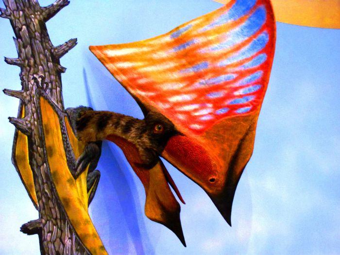 Ptakoještěr z Culmoutu se prý nadechl vzduchu a okamžitě se zachroptěním pošel