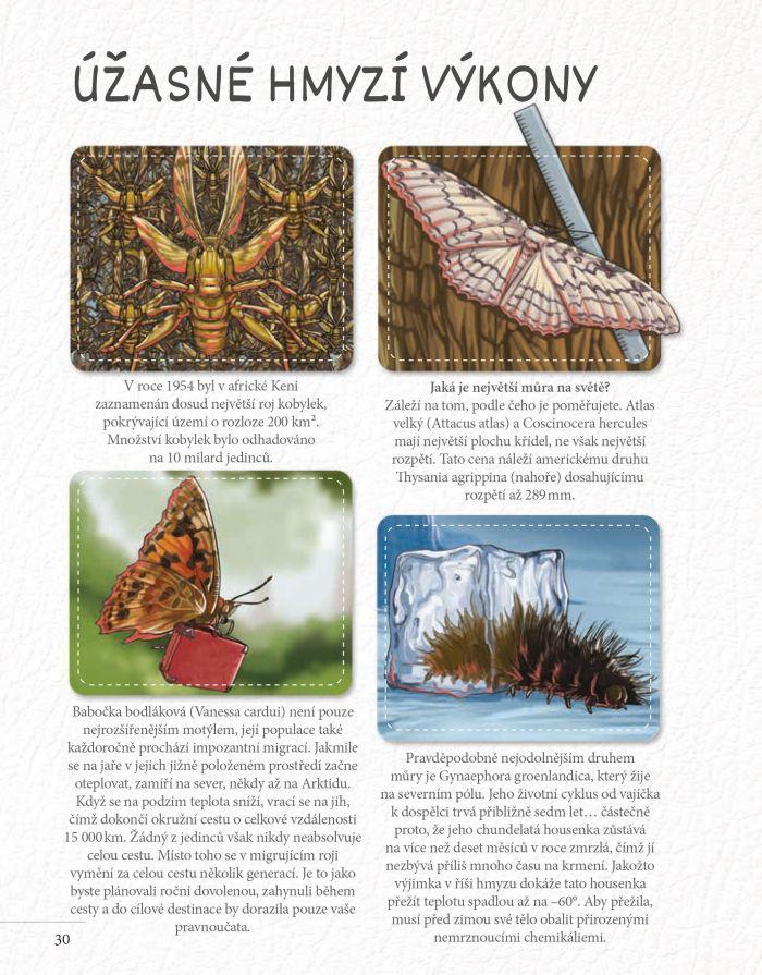 Hmyzí rekordmani: Létající hmyz