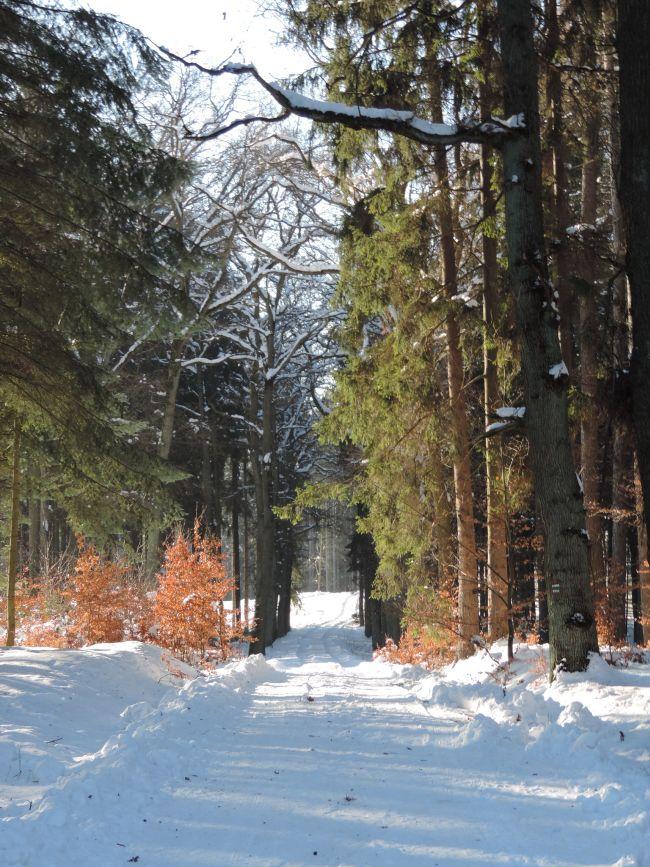 Hrubá Skála - les