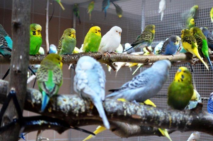 Papoušci se mají ve Vyškově jako v Austrálii