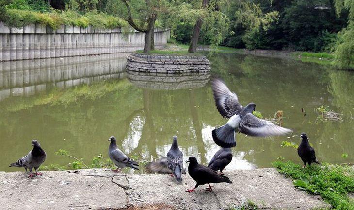 Jezírko v parku Malé Versailles