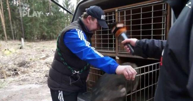 Speciálně vycvičený policejní pes