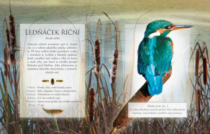 Ptáci volné přírody