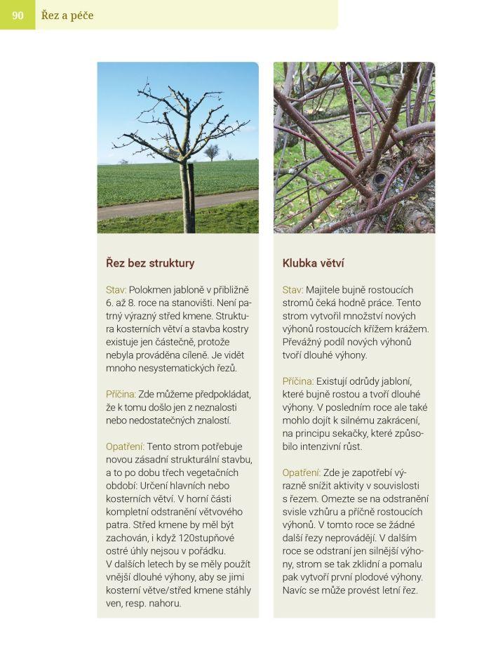 Základy stříhání ovocných stromků