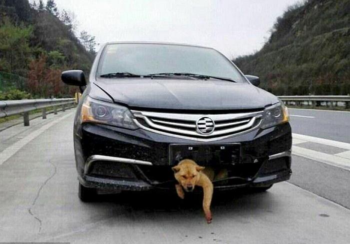 S čínským řidičem cestoval uvězněný pes 400 km