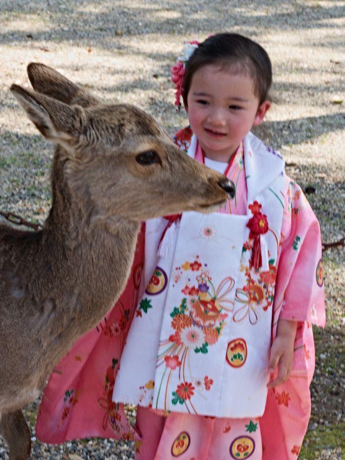 Jelínci jsou v šintoismu považováni za symbolické poslíčky bohů