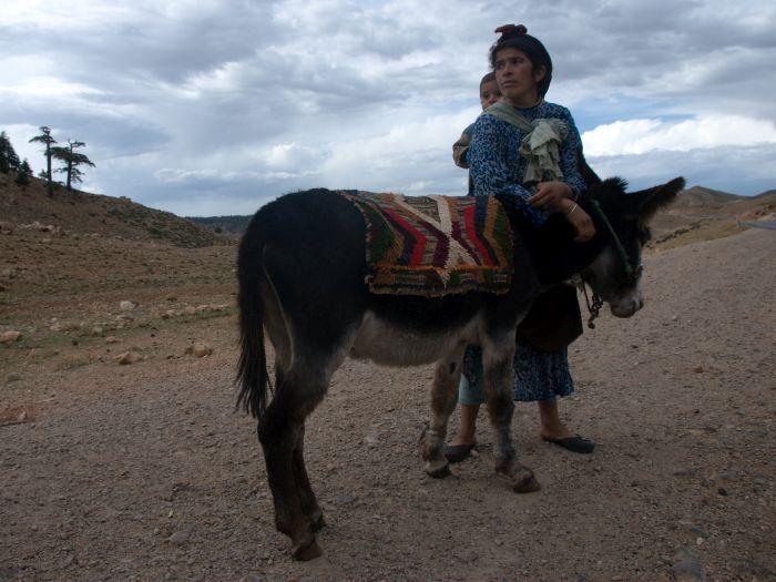 Berberka v podhůří Atlasu