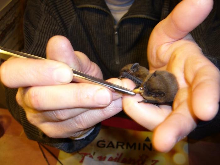 Zraněná, volně žijící zvířata potřebují pomoc odborníků