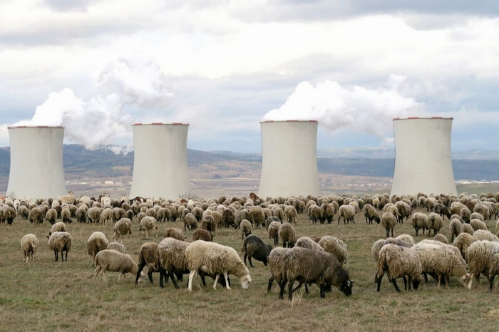 Vloni se v odkališti Elektrárny Tušimice nacházelo 200 ovcí  a 20 koz navrch