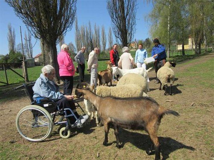 Senioři při návštěvě školního statku v Hořicích