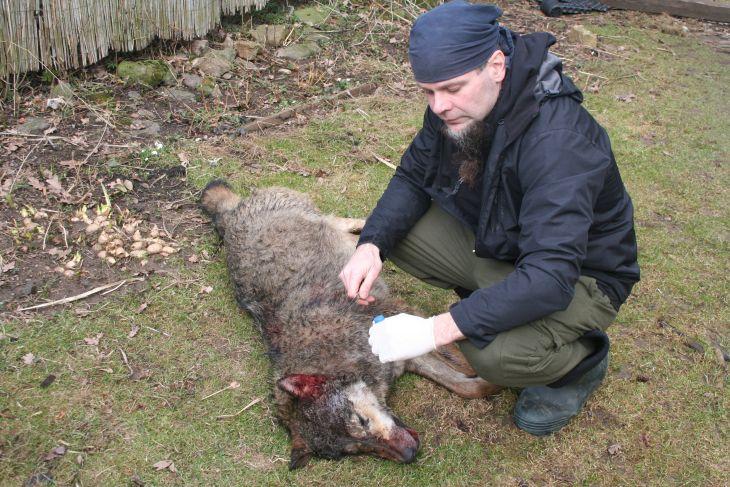 Zoolog Pavel Hulva odebírá vzorek pro genetickou analýzu