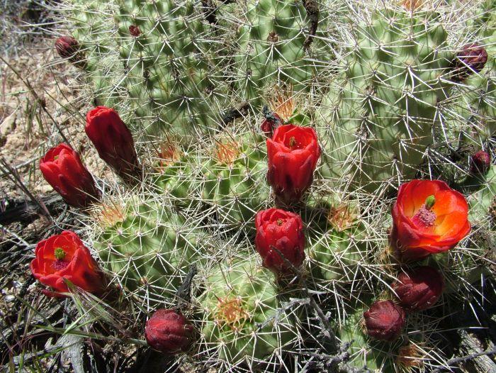 Pozor, nesedat! Místní kaktusy jsou pohádkově krásné, ale při blízkém kontaktu nic příjemného.