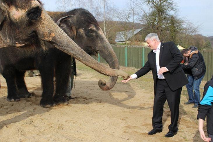 Sloni v ústecké zoo