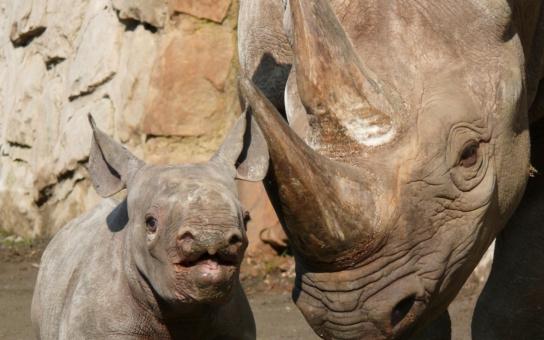Safari Archa: Šedá eminence Holečkové Rabas ředitelem