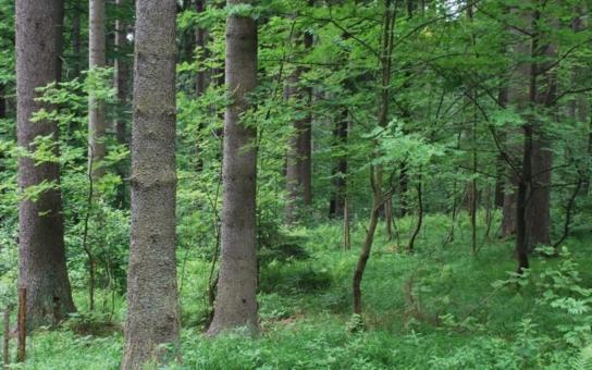 Hnutí Duha: O lesní školce v Lošově rozhodl ministr zemědělství