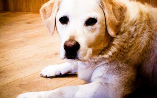 Za neočipovaného psa budou v Havířově padat pokuty