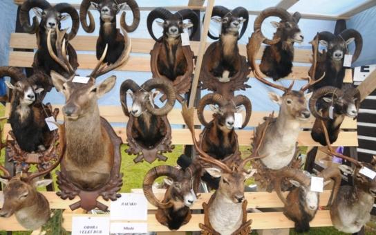 Česká Lípa táhne myslivce největší výstavou svého druhu