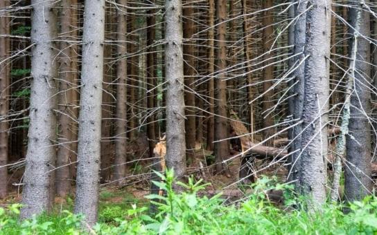 Planá má lesy v Bavorsku. Chce je prodat
