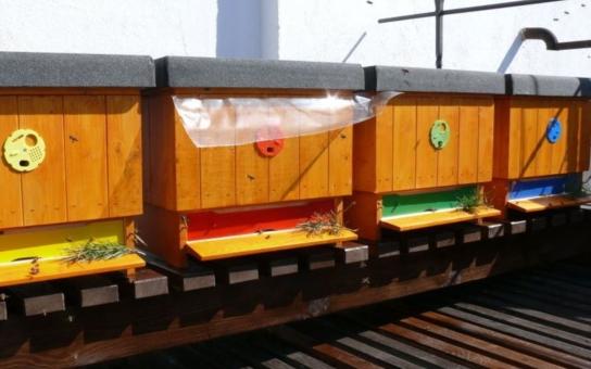 Neuvěříte. Na českobudějovické radnici bzučí včely!