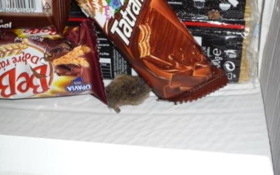 Myšičko myš, pojď ke mně blíž! Hlodavci řádí v Intersparu