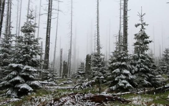 Šumava zažívá nejstudenější květen za 22 let. Napadl sníh