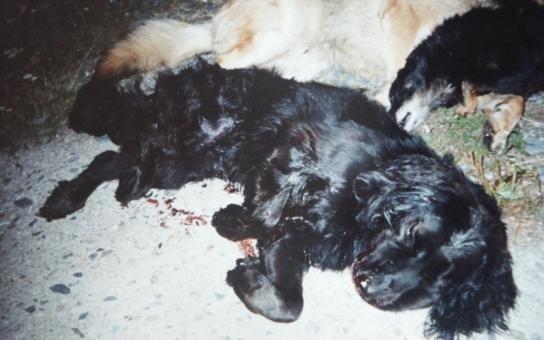 Manžele odsoudili za týrání zvířat. Chovali psy v otřesných podmínkách