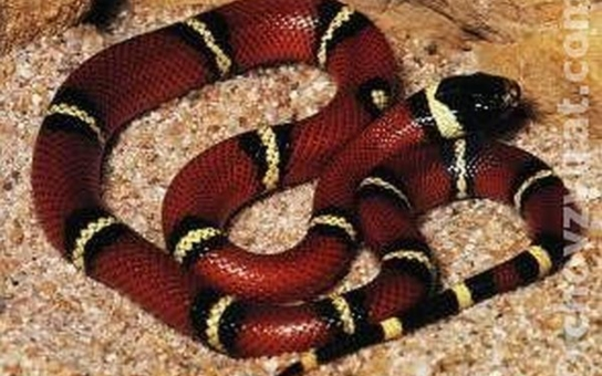 Strážníci chytali hada, ale také opilou ženu