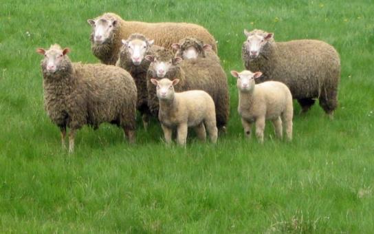 Děsivé scény muslimského vraždění ovcí už i u nás. Středověcí barbaři zkoumají terén. Vědí, že jsme blbečkové a strpíme to, promlouvají senátoři k hrůznému případu z Břeclavska