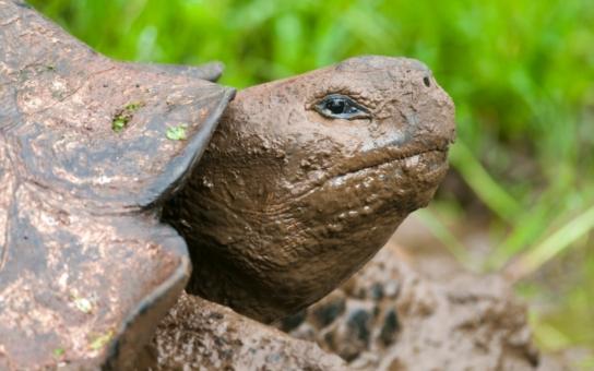 Přerov: Na ztráty a nálezy můžete zanést i zatoulanou želvu
