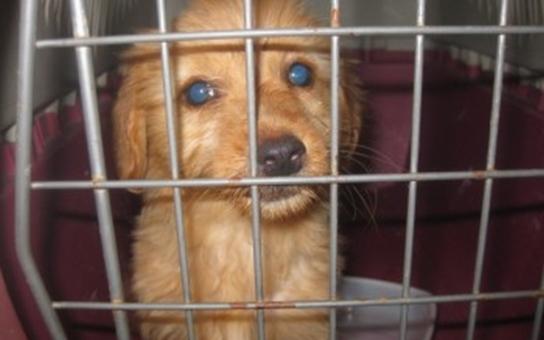 V Hradci Králové nalezli štěně v zauzlované igelitové tašce. Mělo tam umřít
