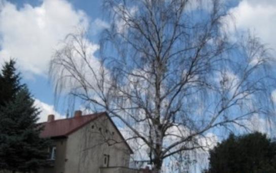 V Hradci Králové někdo zabíjí stromy herbicidem