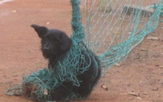Zamotaného psíka v tenisové síti zachránili strážníci
