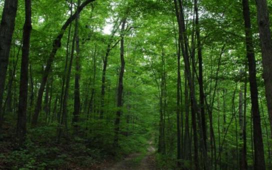 Město Zábřeh označilo významné stromy z let 1919 a 1968