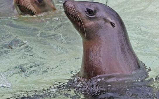 Ústecká zoo chystá velké úpravy za 6 milionů korun