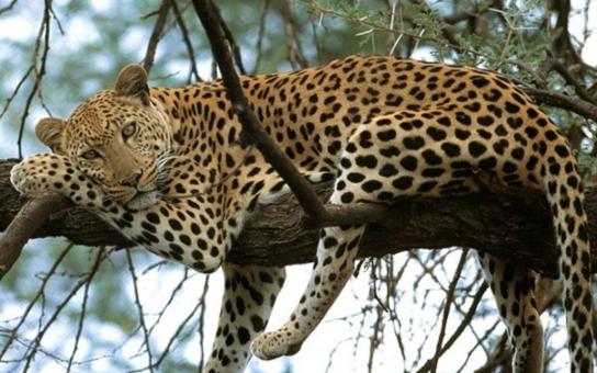 Problematická zoo v Táboře se otevřela s velkou pompou. Pod pozlátkem jsou prý však velké šrámy, upozorňuje mimo jiné komunistický zastupitel