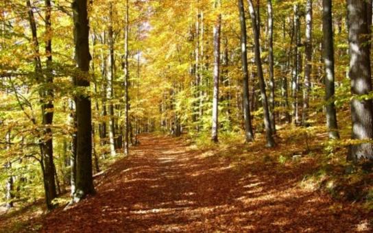 Novým Borem povede naučná stezka na dvě hodiny chůze