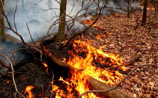 V Pardubickém kraji platí výstraha zvýšeného nebezpečí požárů