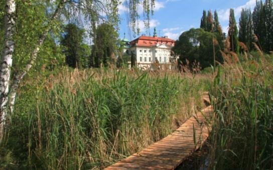 Čmelák otevřel mokřady v Jablonném: Revitalizovaný přírodní prostor je místo pro rekreaci, ale i nový domov chráněných rostlin a živočichů