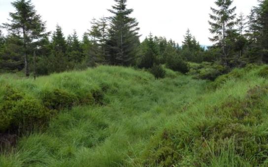 Vláda schválila čtyři miliardy na revitalizaci Krušných hor. Vedle změn lesních porostů se počítá s kompenzací imisní zátěže vápněním či odstřelem přemnožených jelenů