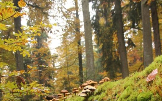 Češi jsou s tuzemskou dovolenou stále spokojenější, uvádí agentura CzechTourism. Nejoblíbenější je Šumava