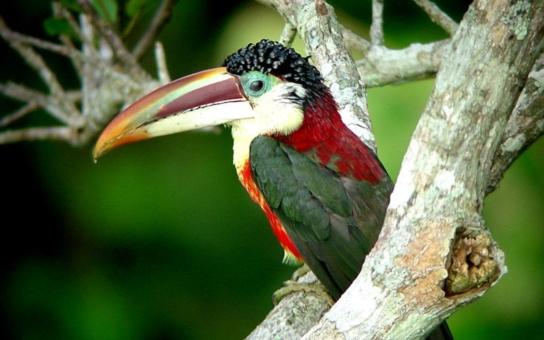 Kolekce malých tukanů – arassariů, ary zelené, amazoňané rudoocí, aratingy žluté, kakadu přilbový… Exota Olomouc začíná v pátek a nabízí i naprosté unikáty