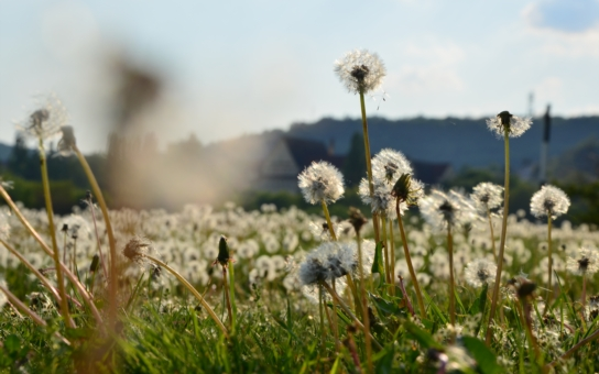 Každý den bez smogu je pro dětský organismus nesmírně přínosný. Konšelé otevřeli krajskou kasu: Za čistějším ovzduším budou moci během topných sezon vyjet i předškoláci