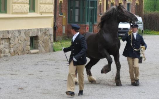 Návrat chladnokrevných koní na Šumavu prý musejí zastřešit živnostníci. Projekt bývalého vedení nyní počítá s dražbou
