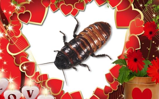 Poslala vás do háje? Dal vám kopačky? Máme pro vás speciální tip na brutální valentýnský dárek. A není ani moc drahý…